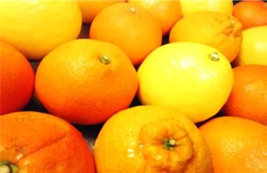 柑橘類その2