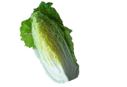 茨城県産 春白菜!