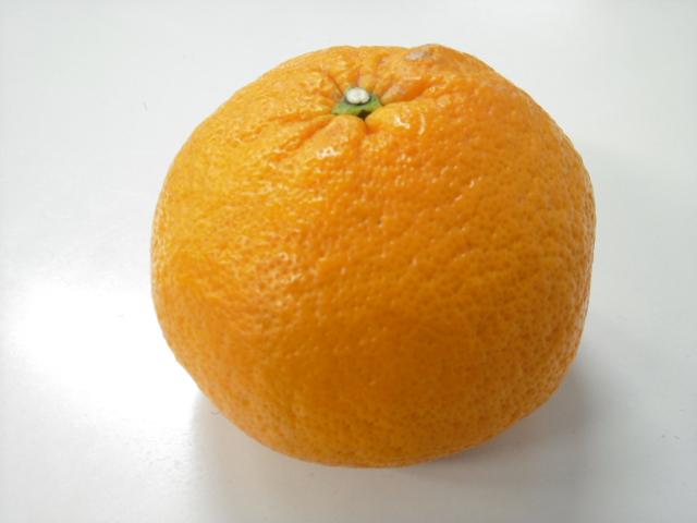 すっきり爽やか柑橘が食べたい