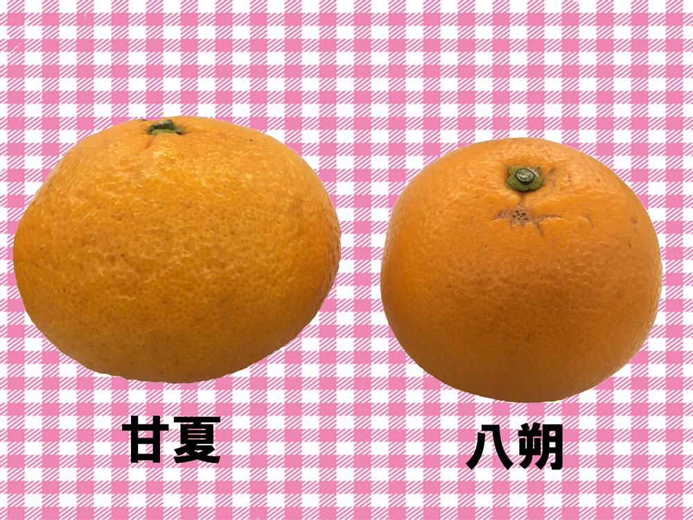 さっぱりさわやか柑橘ソース2種