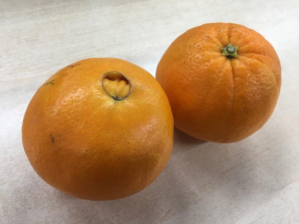 国産のオレンジ!