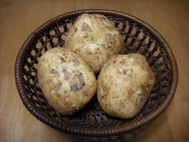 新馬鈴薯始まっています