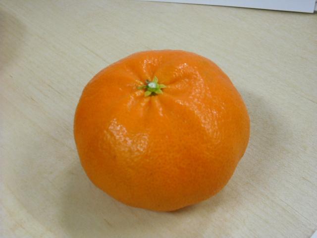 オススメ柑橘『甘平』