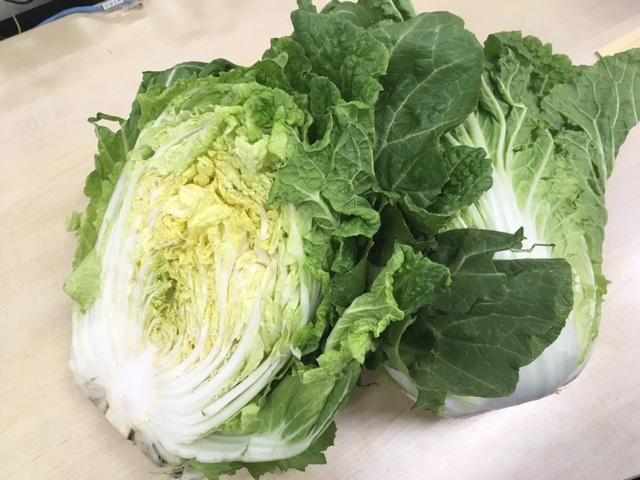 茨城県産 春白菜