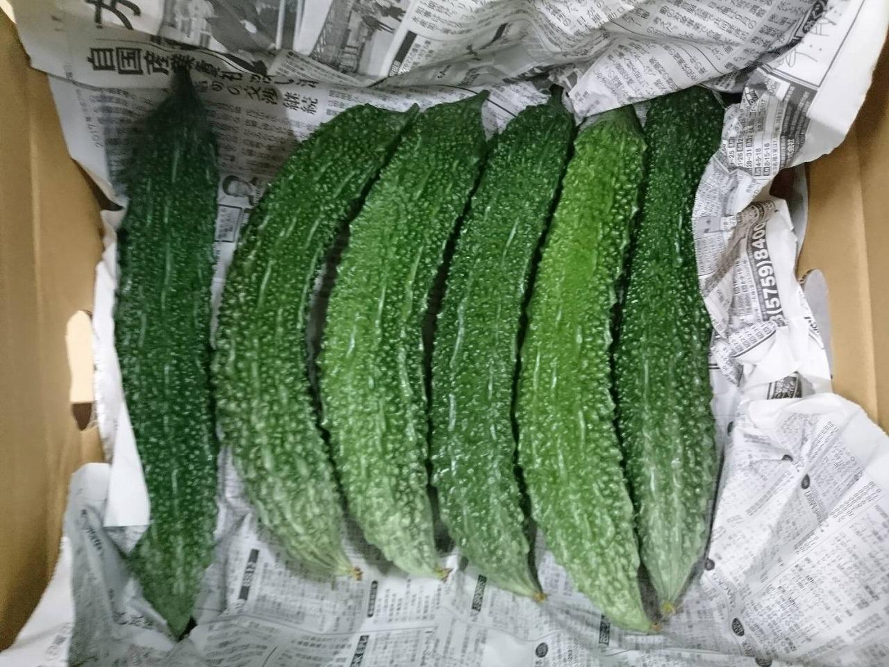 夏野菜「ゴーヤ」