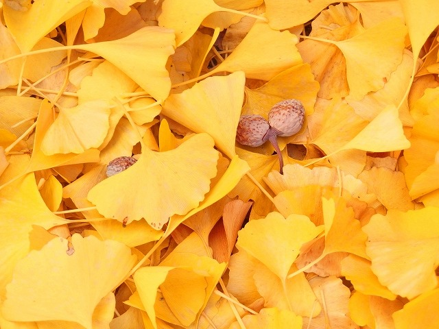 あっという間に秋です