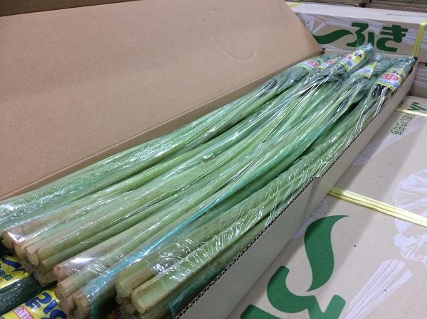 愛知県産ふきの入荷が始まりました