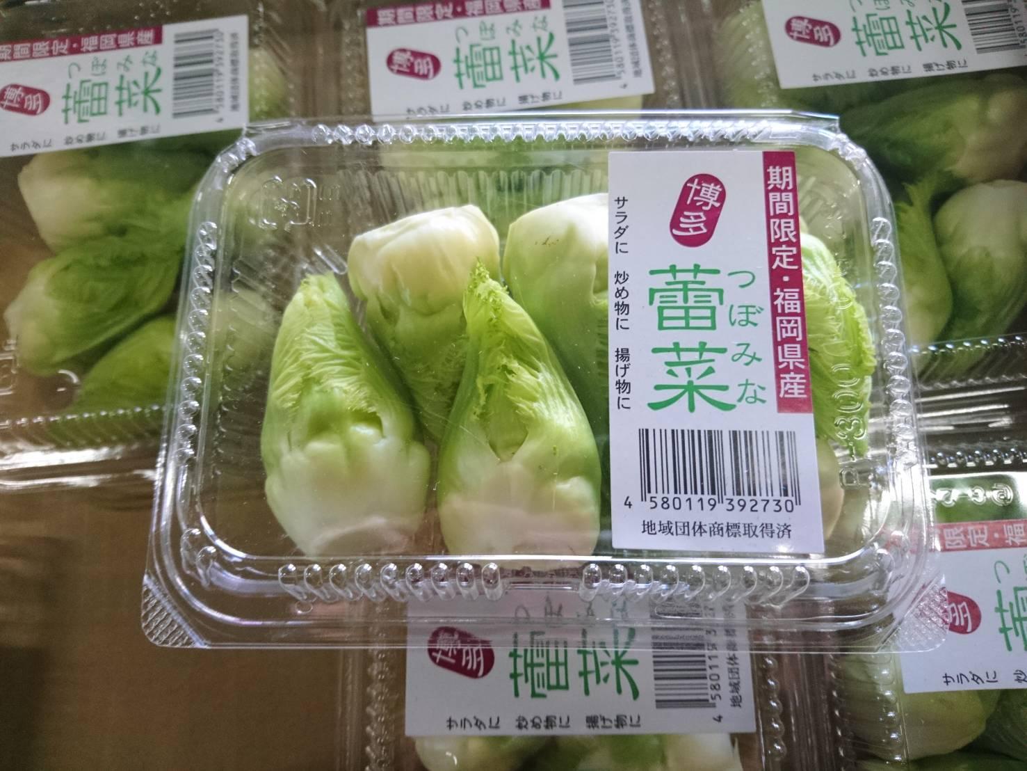 【期間限定】博多 蕾菜