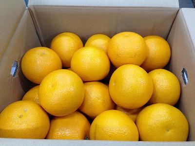 旬の果物で風邪予防