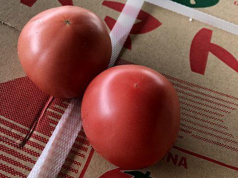 尾瀬トマト