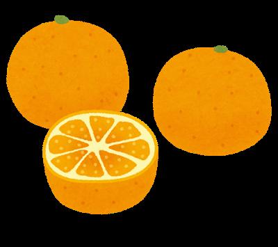柑橘がたくさん!