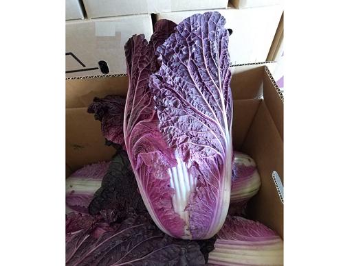 彩りが良い白菜